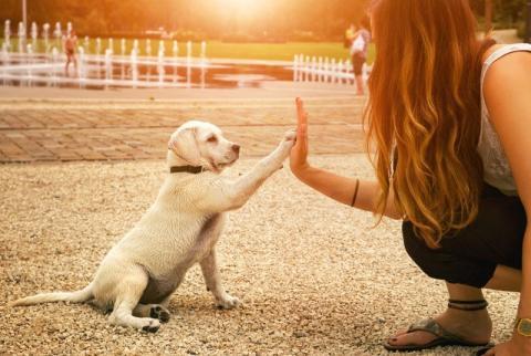 Ecole du chien