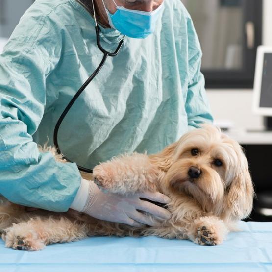 vétérinaire chien
