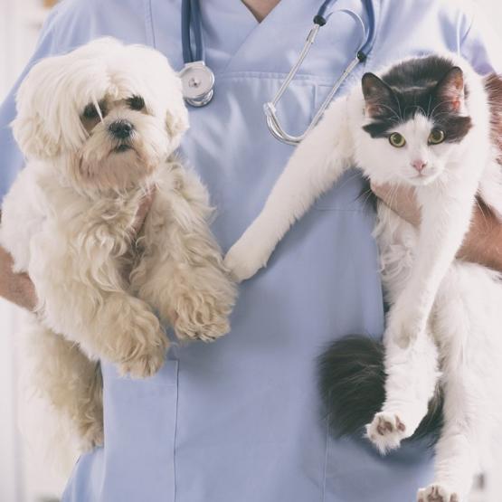 chat et chient